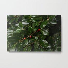 Holly plant photo Metal Print