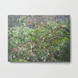 Apple Tree In The Forest Metal Print