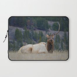 Elk with one antler in Jasper National Park | Canada Laptop Sleeve