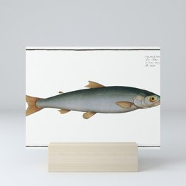 Umble (Salmo Umbla) from Ichtylogie, or Natural History General and Particular of Fishes (1785–1797) Mini Art Print