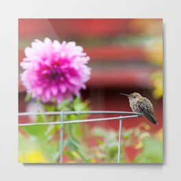 Meal Planning For Hummingbirds Metal Print