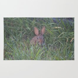 Rabbit in the Grass Rug