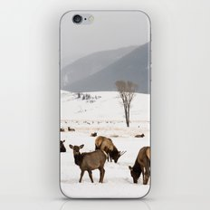 Herd of Elk in Wyoming on a Snowy Winter Day iPhone & iPod Skin