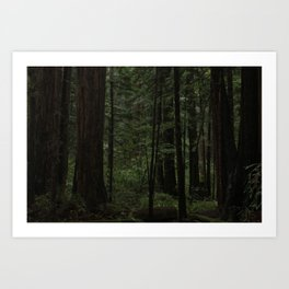 Forest of Redwoods Art Print