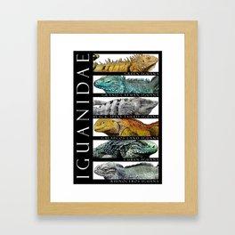 Iguanas of the World Framed Art Print