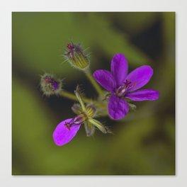 Wid Purple Canvas Print