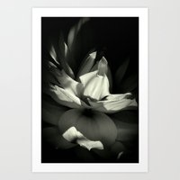 orchid Art Prints featuring Orchid by BavosiPhotoArt