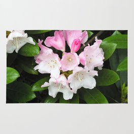 Pink Rhododendron in Spring Rug
