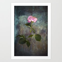 Single Wilted Rose Art Print