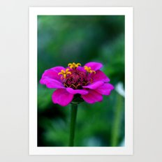 pink & yellow flower Art Print