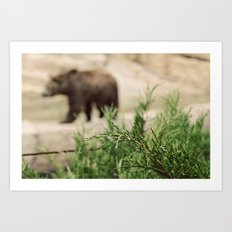 Mr Brown Bear Art Print