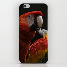 Bird with a Feather iPhone & iPod Skin
