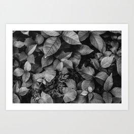 The Glow of Nature Art Print