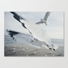 Seagull {Six} Canvas Print