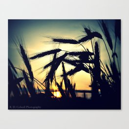 Sunrise Wheat Canvas Print