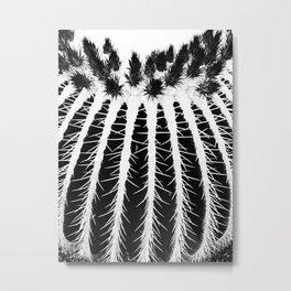 Texture Of Cactus  Metal Print