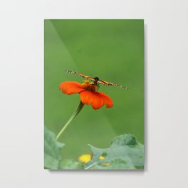 Butterfly on Orange Mexican Sunflower Metal Print