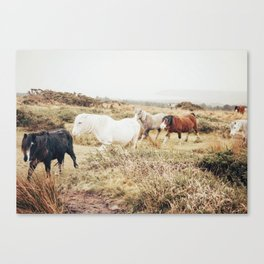 All the Horses Canvas Print