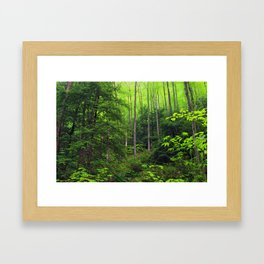 Forest Hill Framed Art Print