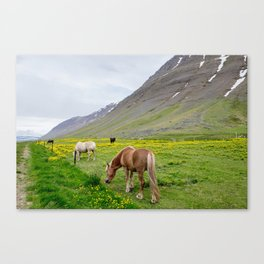 Buttercups And Ponies Canvas Print