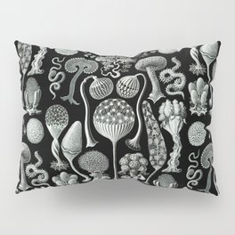 Ernst Haeckel - Mycetozoa (black) Pillow Sham