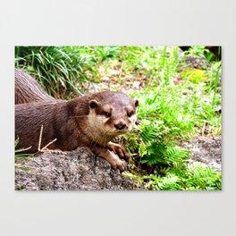 Otter Love Me Canvas Print