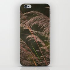 Late in the Summer iPhone & iPod Skin