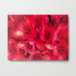 Red in the garden Metal Print