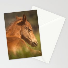 Cute Foal Laying Down Stationery Cards