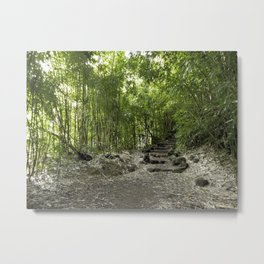 Inside the Bamboo Rainforest Metal Print