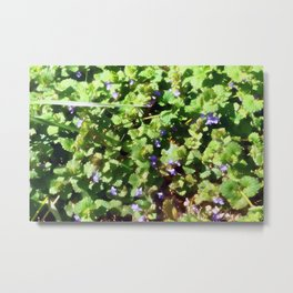 Ground Ivy 05 Metal Print