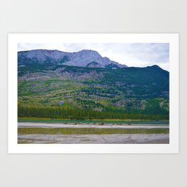 Bull Elk with his Lady Friends on the Athabasca River in Jasper National Park, Canada Art Print