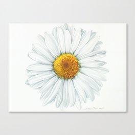 Watercolor Daisy Canvas Print