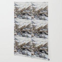 Driftwood and Beach Rocks Wallpaper