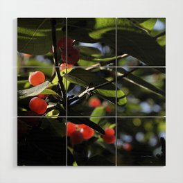 Jane's Garden - Sunkissed Red Berries Wood Wall Art