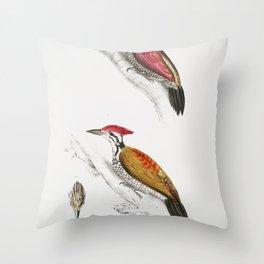 1 Crimson Woodpecker (Picus mineatus) 2 Indian three-toed Woodpecker (Picus Tiga) 3 A head of Female Throw Pillow