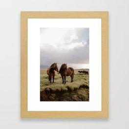 Two Icelandic Ponies Framed Art Print