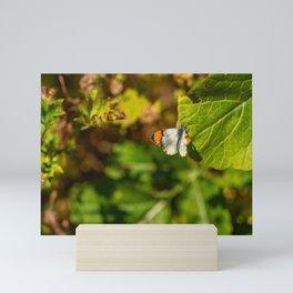Anthocharis sara sara orange tip Butterfly on Leaf Mini Art Print