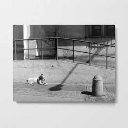 Stray Dog Metal Print