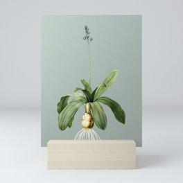 Vintage Scilla Lilio Hyacinthus Botanical Illustration on Mint Green Mini Art Print