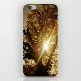 Sunset Behind the Tree iPhone Skin