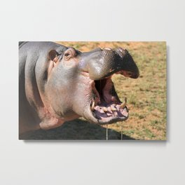Hungry Hippo Metal Print