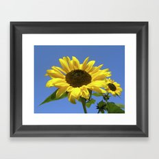summer sunflower V Framed Art Print