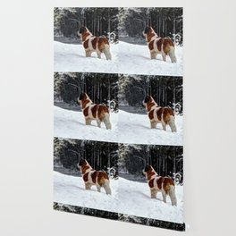 St Bernard in the snow Wallpaper