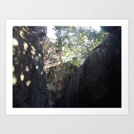 Tree Roots, Rock Formation, Baths, Virgin Gorda, Brittish Virgin Islands. Art Print