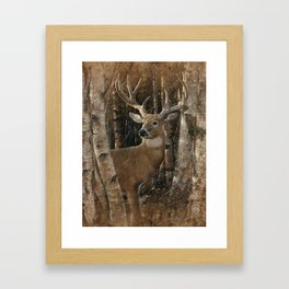 Deer - Birchwood Buck Framed Art Print
