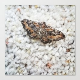 flutterby moth Canvas Print