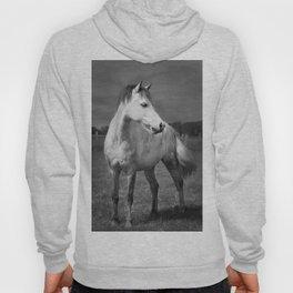 Storm Horse Hoody