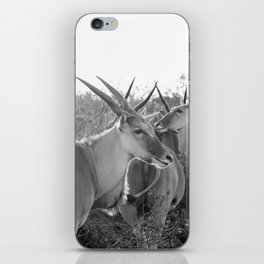 Herd of Eland stand in tall grass in African savanna iPhone Skin