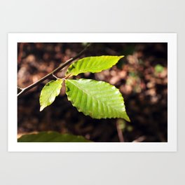 Leaves Art Print